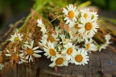 Blumenstrauß von Gänseblümchen auf dem Stumpf Lizenzfreie Stockfotografie