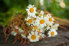 Blumenstrauß von Gänseblümchen auf dem Stumpf Stockfotos