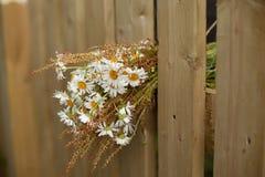 Blumenstrauß von Gänseblümchen auf weißem Bretterzaun Stockbild
