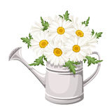 Blumenstrauß von Gänseblümchen in der Gießkanne. Vektor. Stockbilder