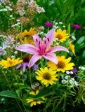 Blumenstrauß von Gänseblümchen und von Lilien Stockbild