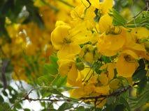 Blumenstrauß von gelben Blumen in einem Baum stockbild