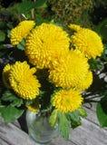 Blumenstrauß von gelben Mamas Stockfotos