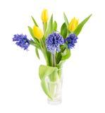 Blumenstrauß von gelben Tulpen und lila von Hyazinthen lokalisiert auf einem Weiß Lizenzfreie Stockfotos