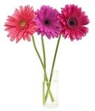 Blumenstrauß von gerber Stockbilder
