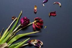 Blumenstrauß von getrockneten Rosen auf einem schwarzen Hintergrund Stockfotos