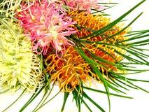 Blumenstrauß von Grevellias Lizenzfreie Stockfotografie