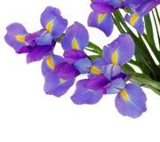 Blumenstrauß von Iris stockbild