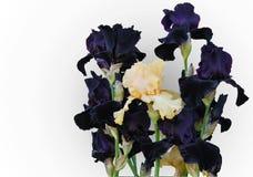 Blumenstrauß von Iris voll der dunklen Farbe mit Pfirsich blüht Lizenzfreies Stockfoto