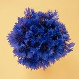 Blumenstrauß von Kornblumen auf einem blassen Pfirsichpastellhintergrund Stockfotografie