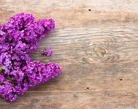 Blumenstrauß von lila purpurroten Blumen stockbilder