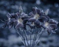 Blumenstrauß von Lilien Lizenzfreie Stockbilder