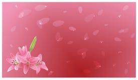 Blumenstrauß von Lilien und von Fliegenblumenblättern Stockbilder