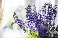 Blumenstrauß von Lupines im Raum Stockfotografie