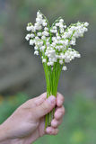 Blumenstrauß von Maiglöckchen in einer weiblichen Hand Lizenzfreie Stockfotografie