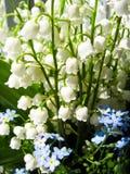 Blumenstrauß von Maiglöckchen und von blauen Blumen Stockbilder