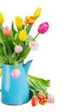 Blumenstrauß von mehrfarbigen Tulpenblumen im Blau stockfotos