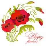Blumenstrauß von Mohnblumen hält auf, die lokalisierten Blätter und Knospen Stockbilder