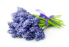 Blumenstrauß von Muscari Stockfoto