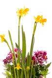 Blumenstrauß von Narzissen und von Chrysanthemen Stockfotos