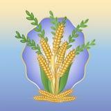 Blumenstrauß von Ohren des Weizens Lizenzfreie Stockbilder