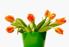 Blumenstrauß von orange Tulpen vor hellem backgroun Stockfotografie