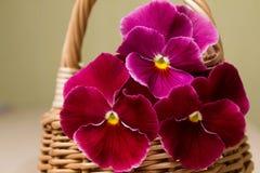 Blumenstrauß von Pansies Lizenzfreie Stockbilder