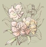 Blumenstrauß von Pfingstrosen Lizenzfreie Stockfotografie