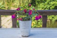 Blumenstrauß von purpurroten Blumen draußen Stockfoto