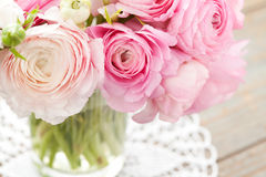 Ranunculus Lizenzfreies Stockfoto