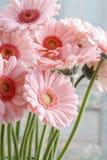 Blumenstrauß von rosa Gerberagänseblümchen Stockbild