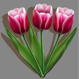 Blumenstrauß von rosa Tulpen auf Grau Lizenzfreie Stockfotos