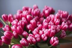 Blumenstrauß von rosa Tulpen auf neutralem Hintergrund lizenzfreies stockfoto