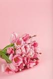 Blumenstrauß von rosa Tulpen auf rosa Hintergrund Stockfotos