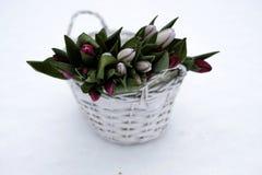 Blumenstrauß von rosa Tulpen in einem Weidentopf Lizenzfreie Stockfotos