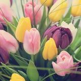 Blumenstrauß von rosa Tulpen mildern Töne Stockbilder