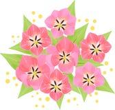 Blumenstrauß von rosa Tulpen mit Mimose Lizenzfreie Stockbilder