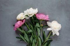 Blumenstrauß von rosa und weißen Pfingstrosen auf grauem Hintergrund lizenzfreie stockbilder
