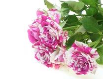 Blumenstrauß von Rosen Lizenzfreie Stockbilder