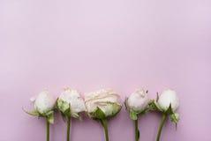 Blumenstrauß von Rosen auf einem rosa Hintergrund mit Platz für Ihren Text Lizenzfreies Stockbild