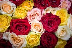 Blumenstrauß von Rosen mit Tautropfen Stockfotos