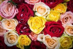 Blumenstrauß von Rosen mit Tautropfen Stockbilder