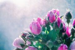 Blumenstrauß von Rosen unter Regen spritzt Stockfotografie