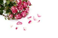 Blumenstrauß von rot-weißen Rosen Stockfotografie