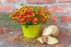 Blumenstrauß von roten Blumen (Helenium) und von riesiger Schnecke (Achatina Reti Stockfoto