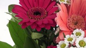 Blumenstrauß von roten Gerberas und von Blumen lokalisiert auf einem weißen Hintergrund stock video footage