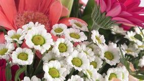 Blumenstrauß von roten Gerberas und von Blumen lokalisiert auf einem weißen Hintergrund stock video