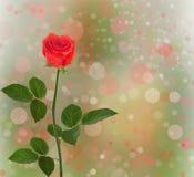 Blumenstrauß von roten Rosen mit grünen Blättern Stockfotografie