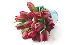 Blumenstrauß von roten Tulpen Stockfotos