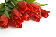 Blumenstrauß von roten Tulpen Stockfoto